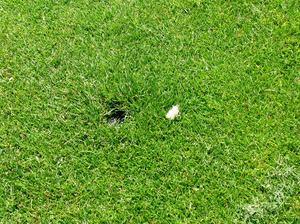 white turf tip.JPG